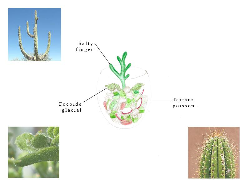 Le-cactus-en-peche