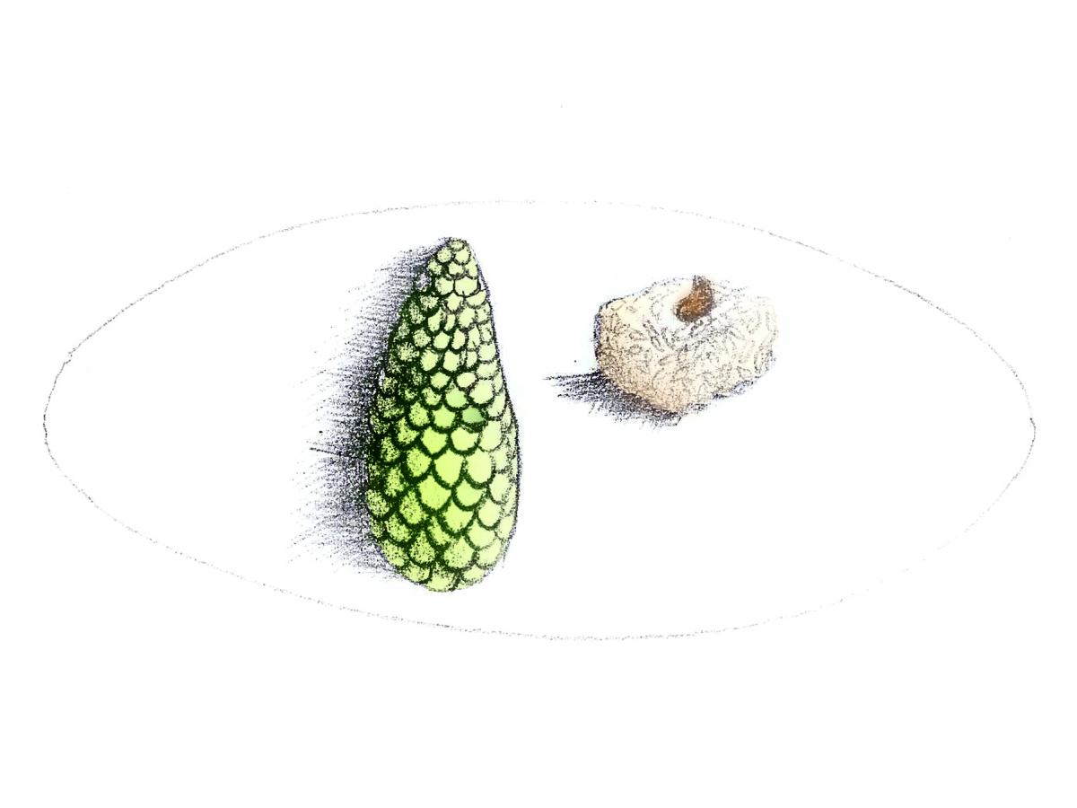 design culinaire - création culinaire - création sur mesure - traiteur de luxe